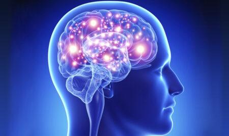 The Brain Conferences